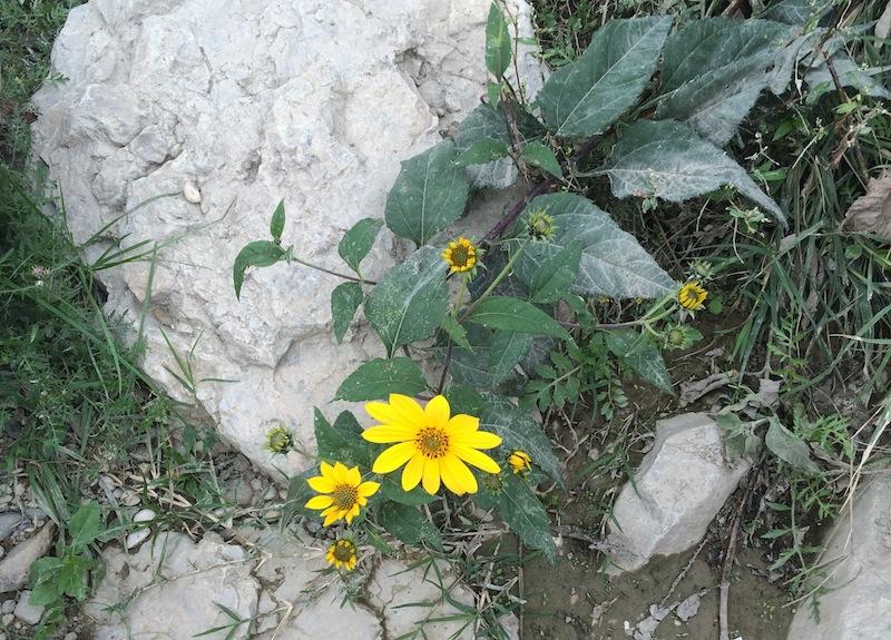 Beautiful_things_grow